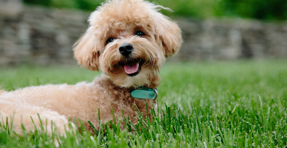 Protect Your Pet from Common Lawn Toxins