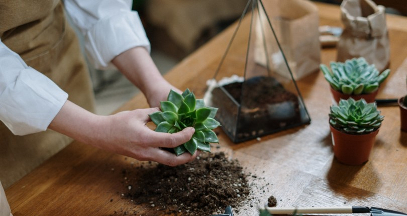 Terrariums—Bringing the Outdoors In