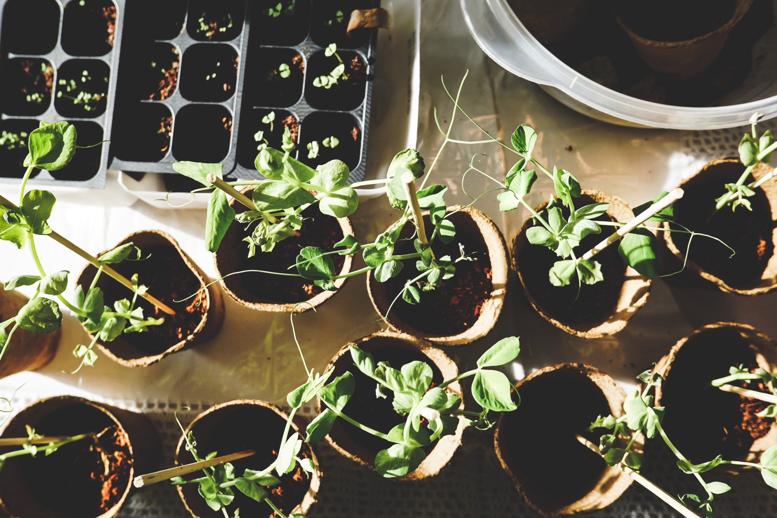 Start Seeds Indoors for a Better Selection