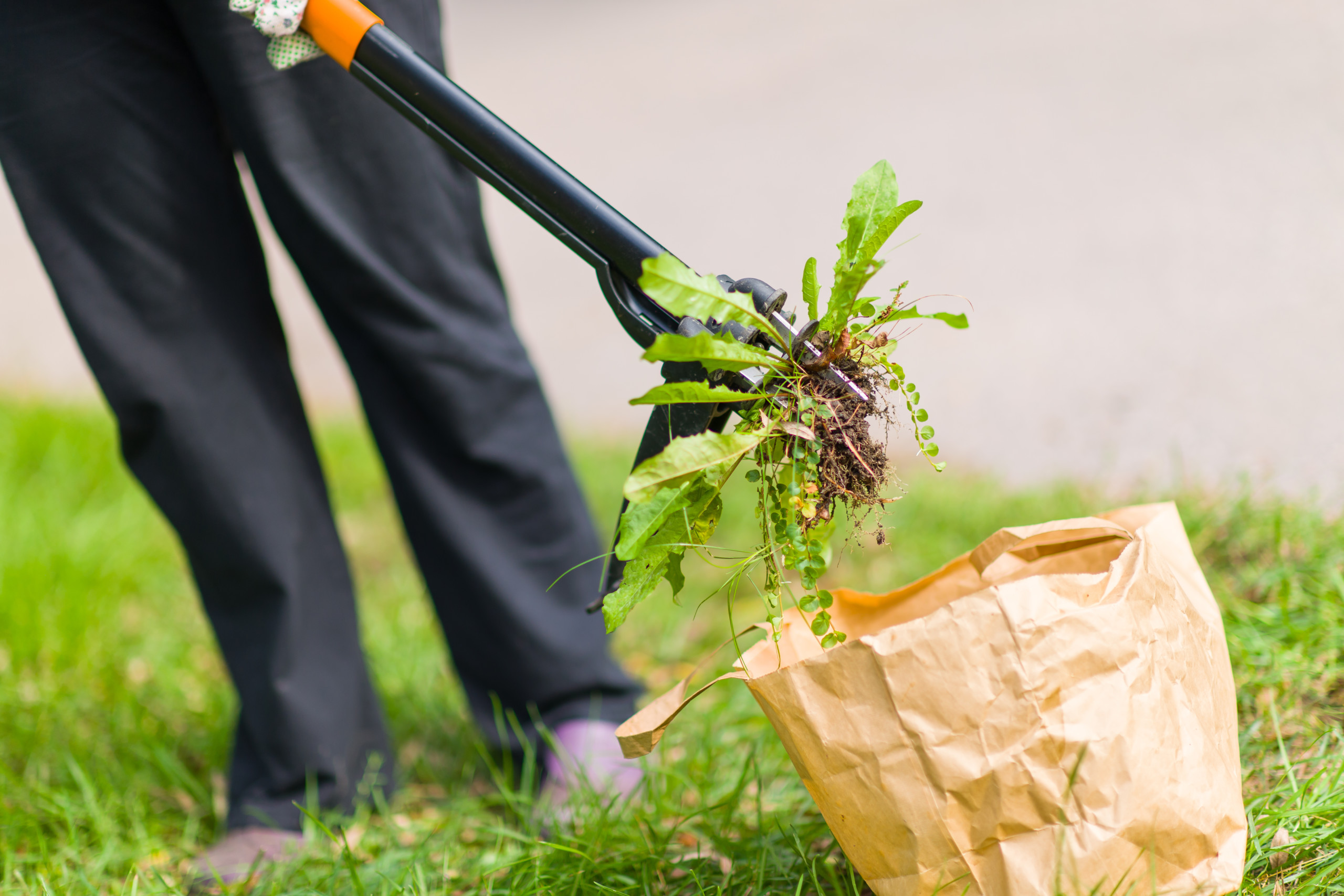Weed vs. Lawn—The Green Way to Win