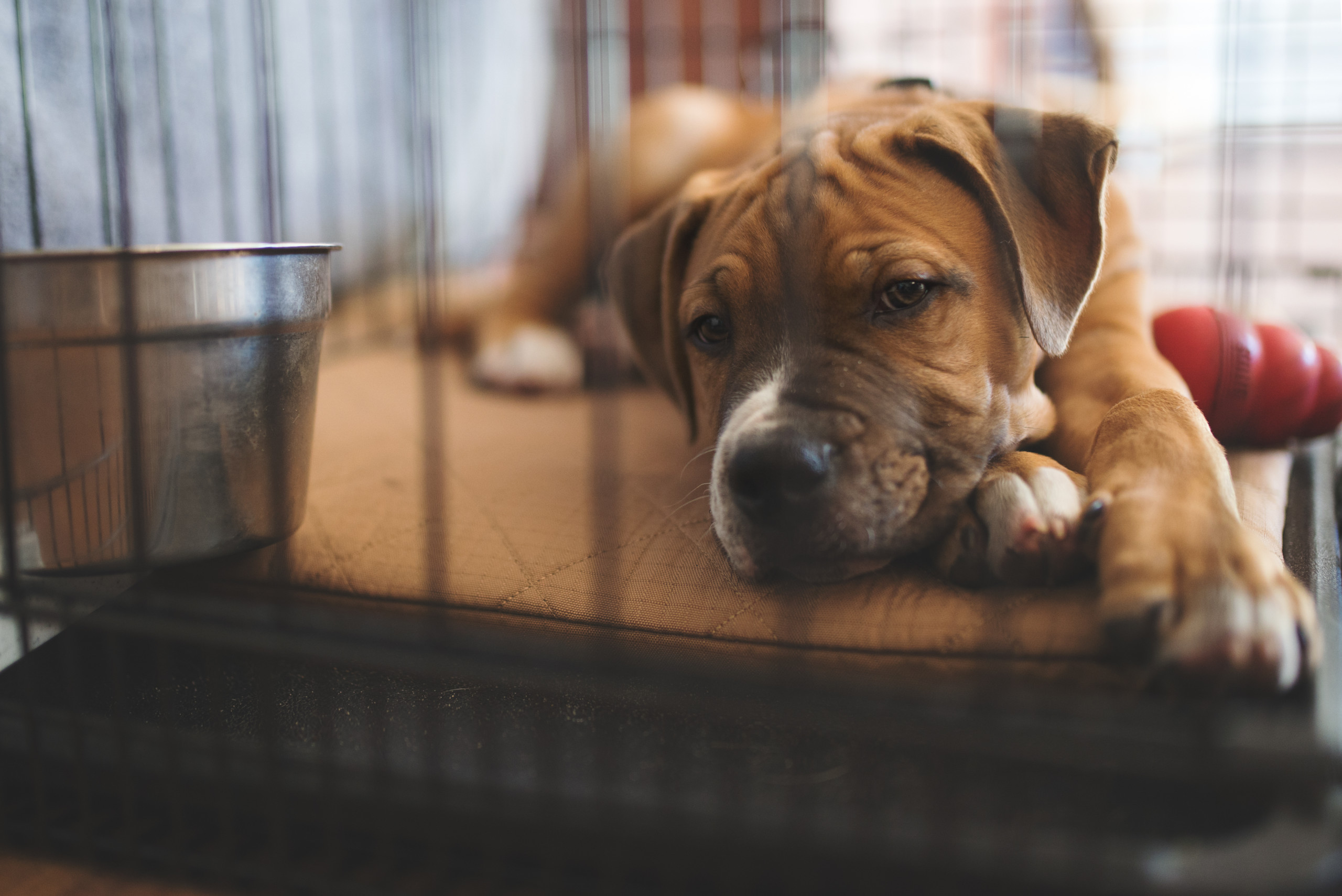 What To Do About Your Pandemic Pets